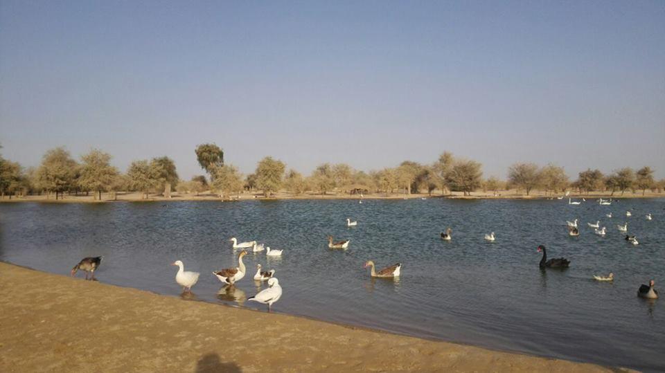 Al-Qudra-Lake-Dubai3