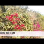 Shawka Dam Dubai