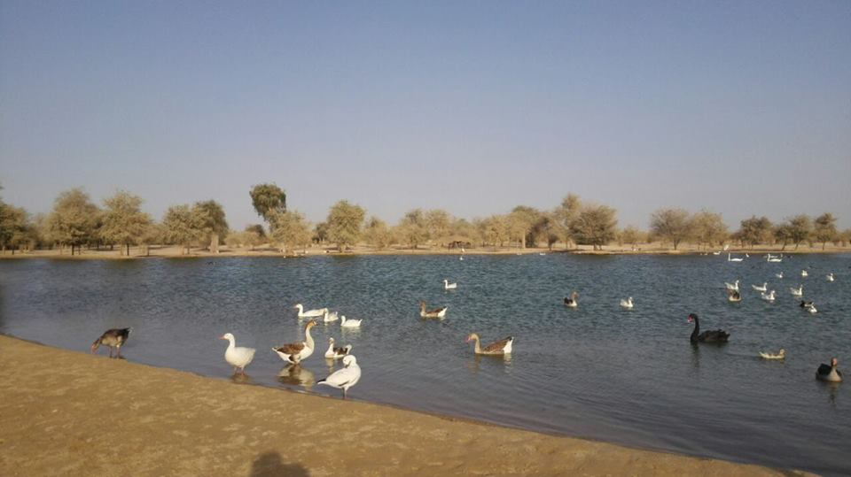 Al Qudra Lake in Dubai, UAE | Places to Visit in Dubai |  خارطة الطريق إلى بحيرة