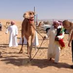 Camel Market Al Lisaili