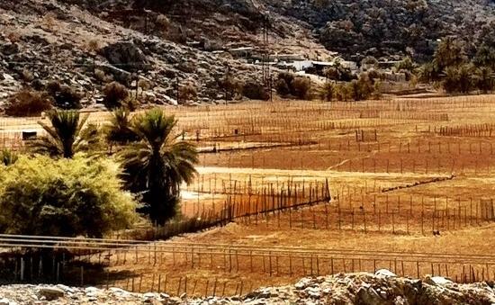 Muscat To Musandam