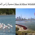 Ras Al Khor Wildlife Sanctuary Dubai