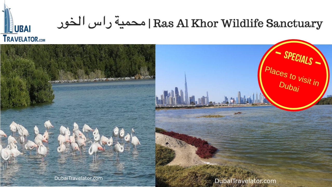 Ras Al Khor Wildlife Sanctuary Dubai | محمية راس الخور