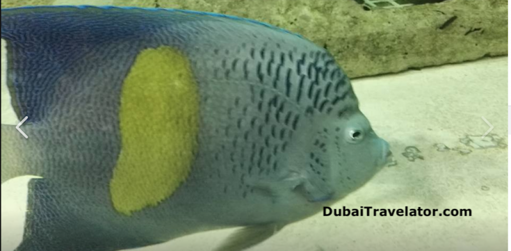 Sharjah Aquarium Carnival