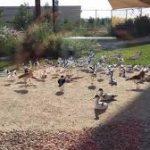 Wasit Wetland Center Sharjah