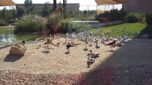 Wasit Wetland Center Sharjah near to Ajman Border