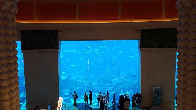Atlantis, The Palm Hotel Dubai Aquarium Area