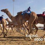 Camel Racing at Al Marmoom: 1-2 January