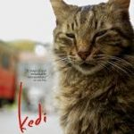 Cinema Akil Screening: Kedi Dubai 2019