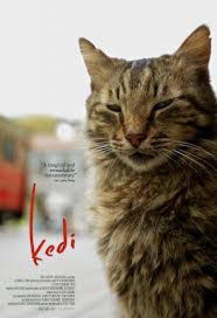 Cinema Akil Screening: Kedi Dubai 2019