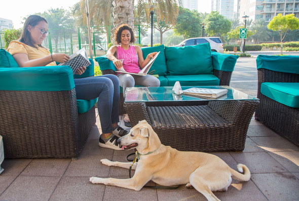 10 Pet Friendly Restaurants In Dubai, United Arab Emirates