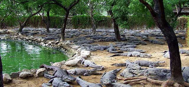 Dubai Crocodile Park – Place to Visit in Dubai, UAE.
