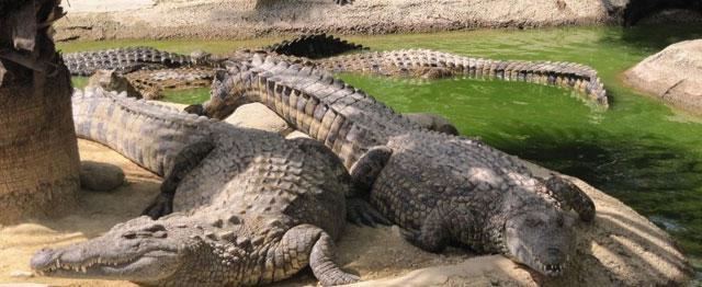 Dubai Crocodile Park