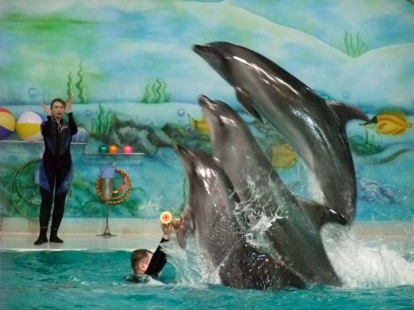 Dubai Dolphinarium – Place to visit in Dubai, UAE