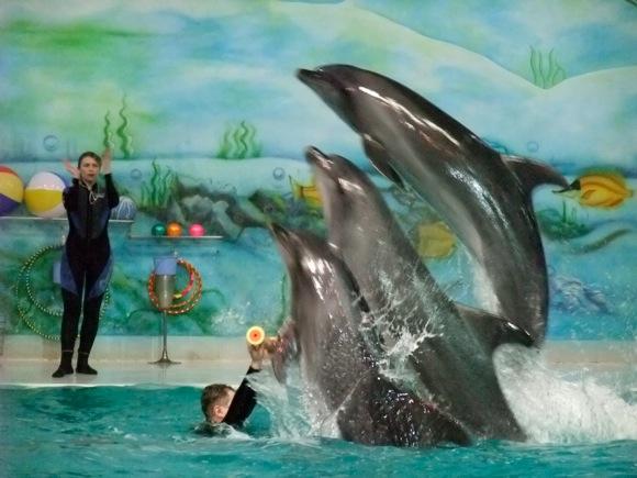 Dubai Dolphinarium, UAE