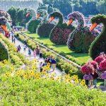 Dubai Miracle Garden Opening Date 2019 - 2020