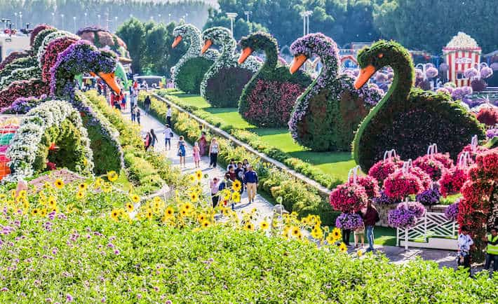 Dubai Miracle Garden Opening Date 2019 – 2020 is 1 Nov 2019