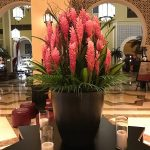 Flower Show at Ibn Battuta Mall Dubai 2019