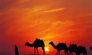 Forever Tourism Dubai. UAE