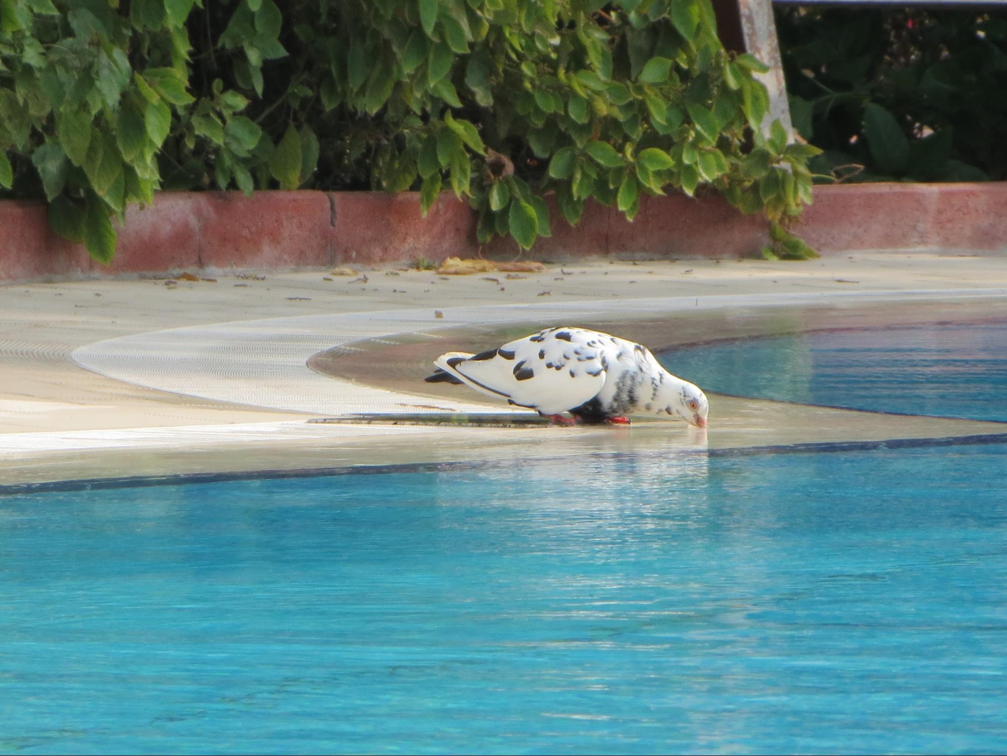 Kempinski Hotel, Ajman Review - Beutiful Pool Area