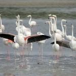 Ras Al Khor Wildlife Sanctuary RAKWS Dubai