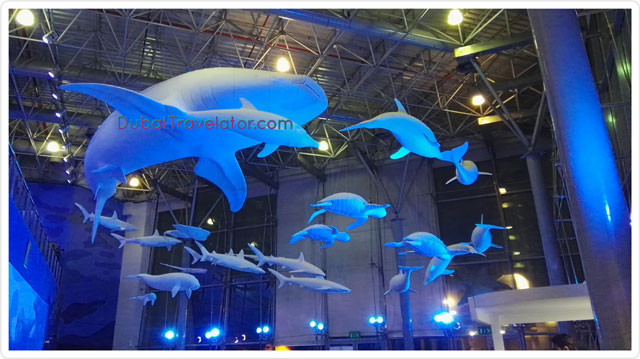 Sharjah Aquarium – Neighbourhood places in Dubai, UAE.