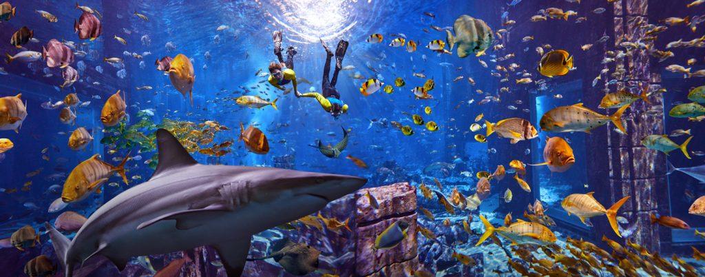 Shark Week at Atlantis, The Palm
