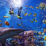 Shark Week at Atlantis, The Palm