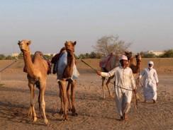 Camel Market Al Lisaili Dubai