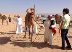 Camel Races Dubai 2017 – 27 and 28 January