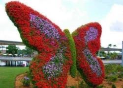 Butterfly Garden in Dubai حديقة الفراشات في دبي
