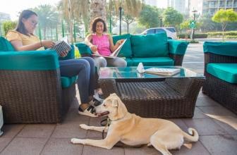 10 Pet Friendly Restaurants In Dubai, United Arab Emirates