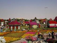 Dubai Miracle Garden – Places to Visit in Dubai