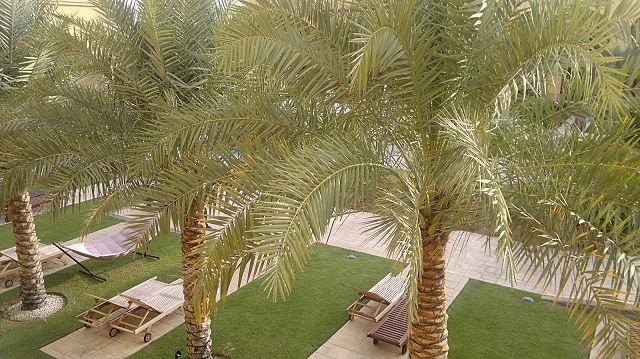 Tilal Liwa Hotel Review - Beautiful Pool Area